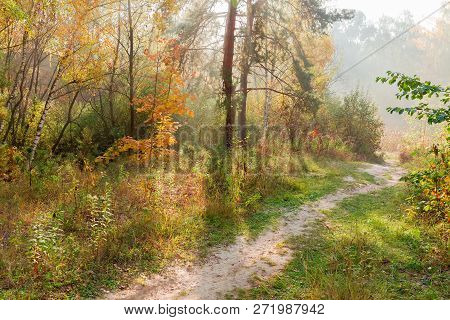 Sandy Footpath In Forest With Deciduous And Conifers Trees In Autumn Sunny Morning