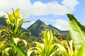 Tropical scene of Martinique mountains, Mount Pelee in the background, Lesser antilles. poster