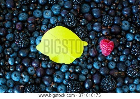 Mix A Set Of Different Types Of Black Berries With A Place For Text And One Red Berry. Stylish Seaso