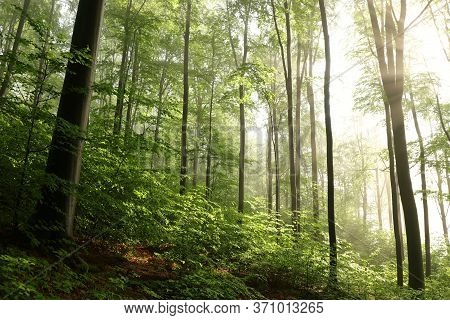 Spring forest sunrise Nature landscape Nature landscape Nature landscape background Nature background Nature landscape Nature background landscape Nature background Nature landscape mist fog Nature landscape Nature trees landscape woods Nature background.