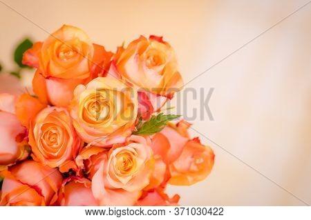 Close Up Macro Photo Of Peach Twilight Roses Variety, Studio Shot.