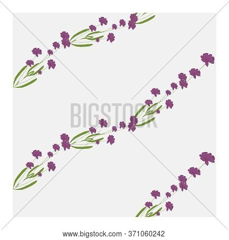 Seamless Pattern With Flowers, Buds And Lavender Leaves. Floral Pastel Print, Ornament, Composition
