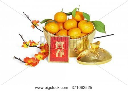 Mandarin Oranges in Gold Ingot Containers With Plum Blossom for Chinese New Year Decoration  - Translation