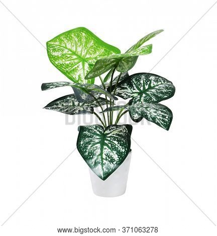 Plastic Arrow Head Potted Plant on White Background