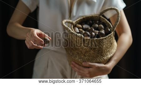 Person Holding Chestnuts On Hand With Wicker Basket Full Of Chestnuts.