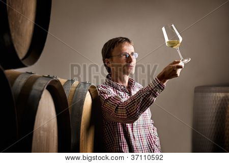 Wine producer inspecting quality of white wine in cellar in front of barrels.