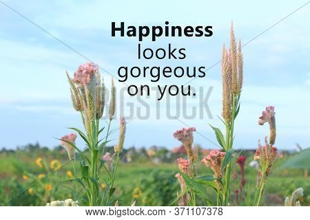 Inspirational Quote - Happiness Looks Gorgeous On You. On Background Of Beautiful Pink Chicken  Cock