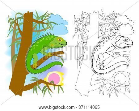 Colorful And Black And White Page For Kids Coloring Book. Illustration Of Cute Green American Lizard