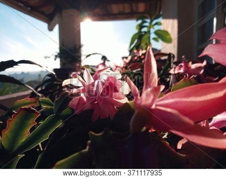 Flores rosas e plantas ao amanhecer embaixo do sol