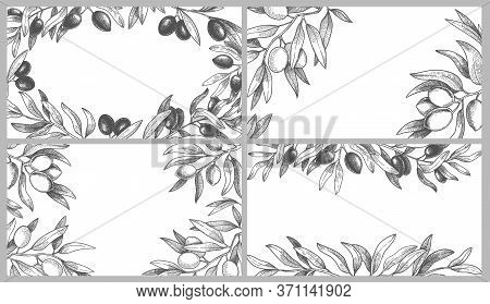 Engraved Olive Branches Frames. Black Olives On Branch With Leaves, Greek Spa Frame And Hand Drawn S