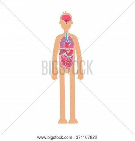Human Body Anatomy Flat Color Vector Faceless Character. Educational Physiology. Inner Organism Syst
