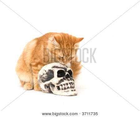 A yellow kitten sits next to a fake human skull used for Halloween decoration poster