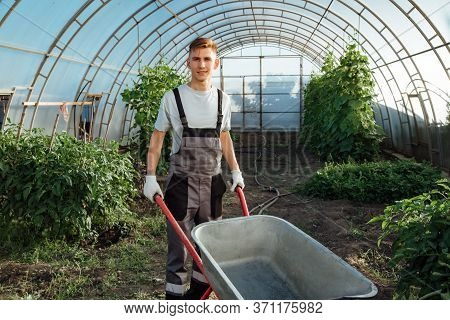 Happy Farmer At Work In Greenhouse.man With A Garden Wheelbarrow In A Greenhouse