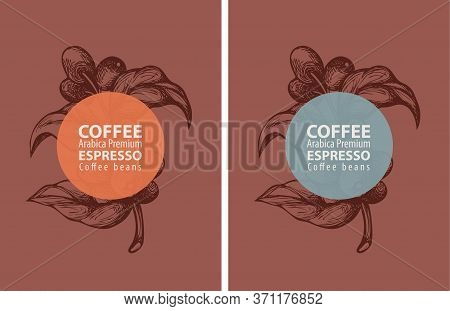 Coffee Labels In Retro Style. Set Of Two Vector Labels For Coffee Beans With Hand-drawn Coffee Twigs