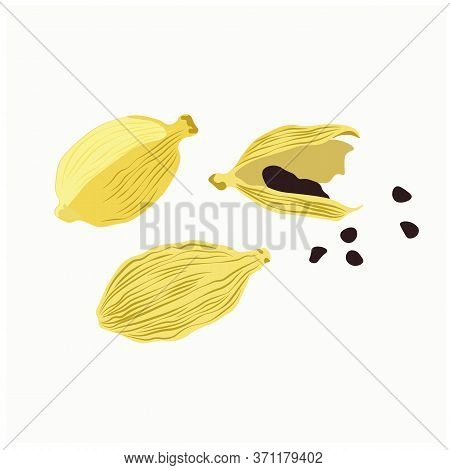 Vector Stock Illustration Of Spicy Cardamom, Grain Seeds In Close-up Isolated On A White Background.
