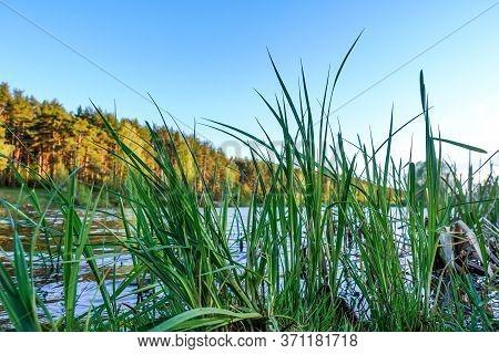 Picturesque Lake In The Forest. Beautiful Summer Landscape
