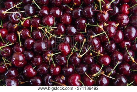Fresh Red Cherries. Cherries Fruits Close Up. Cherry Fruit.