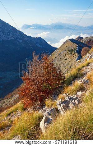 Beautiful Autumn Mountain Landscape. A Tree With Bright Autumn Foliage On A Mountainside. Montenegro