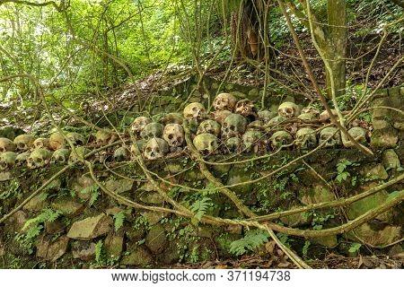 Skulls At Kuburan Terunyan Cemetery On The Island Of Bali. Human Skulls Stacked In Rows On Top Of Ea