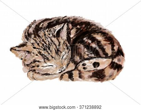 Cute Little Cat Sleeping, Adorable Striped Brown Kitty. Raster Illustration.