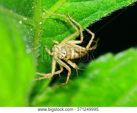 Macro Photography Of Jumping Spider On Green Leaf