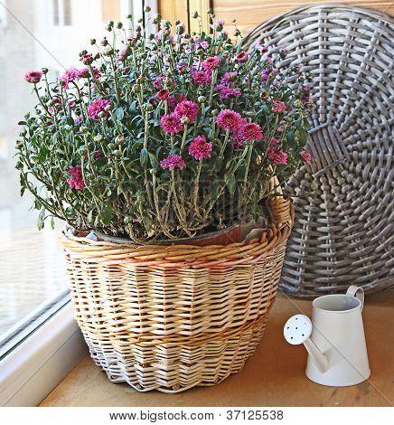 Lilac Chrysanthemum In A Basket