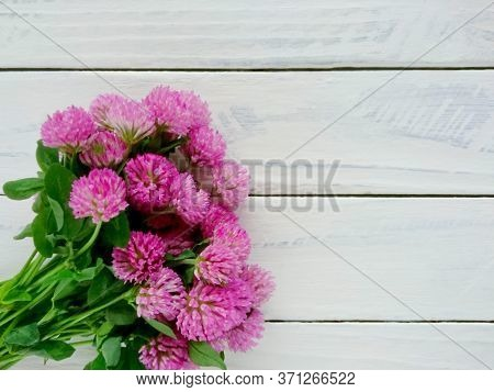 Bunch Of Red Clover Flowers (trifolium Pratense) Close Up. Spring Red Or Pink Clover Flowers Bouquet