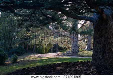 A Bench In The Park Under The Big Pines