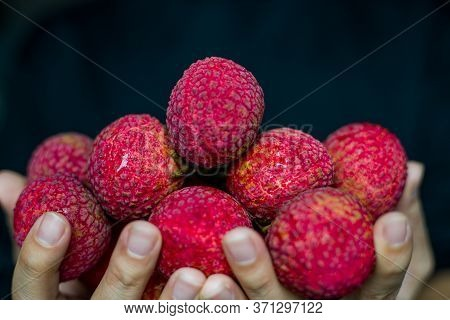 Fresh Red Litchi, Litchi, Ripe Litchi On Your Hand Ready To Eat, Concept Of Showing Litchi Someone,