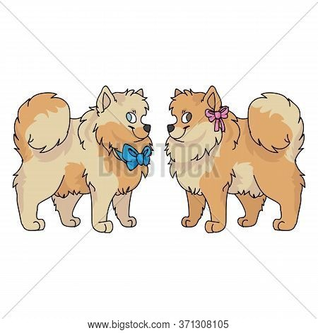 Cute Cartoon Pomeranian Dog Boy And Girl Vector Clipart. Pedigree Kennel Doggie Breed For Dog Lovers