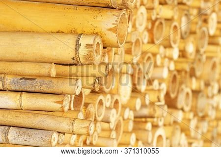 Golden Bamboo Trunks. Stack Of Bamboo Cuts, Bamboo Slices Background, Texture
