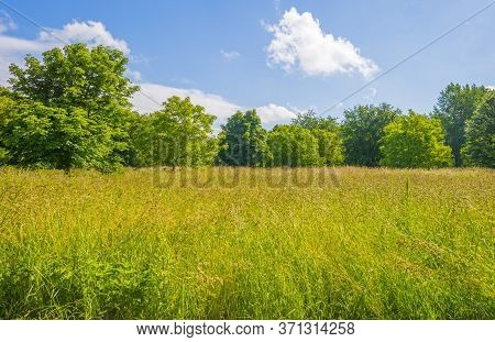 Lush Green Foliage Of Trees In A Grassy Field Of A Forest In Sunlight In Spring