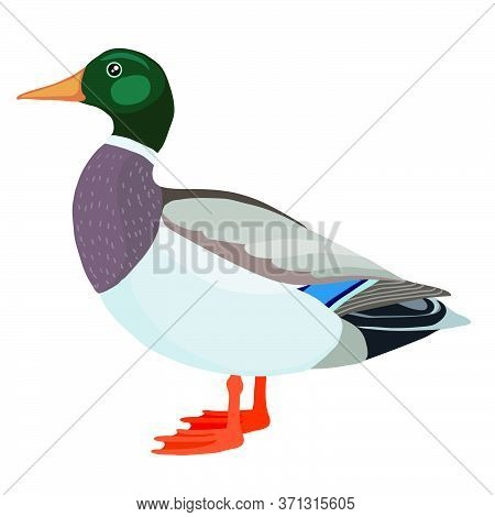 Duck Or Drake From The Farm, Logo, Isolated Object On A White Background, Vector Illustration, Eps