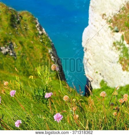 View From Top, From The Cliff Down To The Sea. Tops Of Chalky Cliffs Covered With Green Grass, Armer