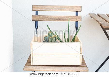 Cactus And Aloe Vera In A Wooden Box On The Street. Garden. Minimal