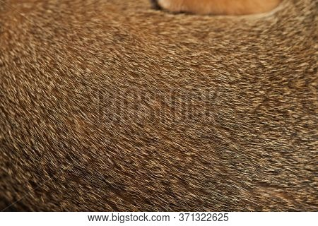 Brown Cats Fur Background Cat Hair Texture Close Up Background Concept For Background, Textures And