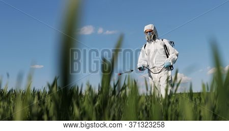 Close Up Of Male Farmer In White Protective Costume Walking In Greengrass In Field And Spraying Pest