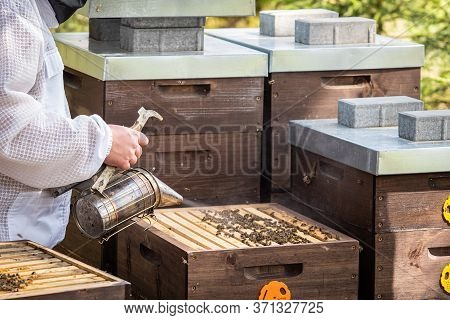 The Beekeeper Looks After Bees. The Beekeeper Opens The Hive, The Bees Checks, Checks Honey. Beekeep