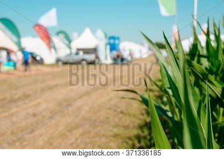 Corn Leaves At An Agricultural Fair, Road, Tents And Brand Flags