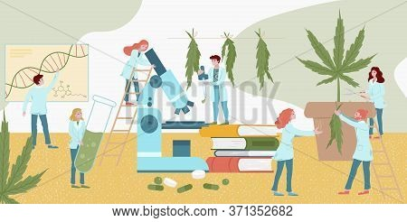 Tiny Character Lab Medicines Plant Research Cannabis, Male Female Analysis Fellow Flat Vector Illust
