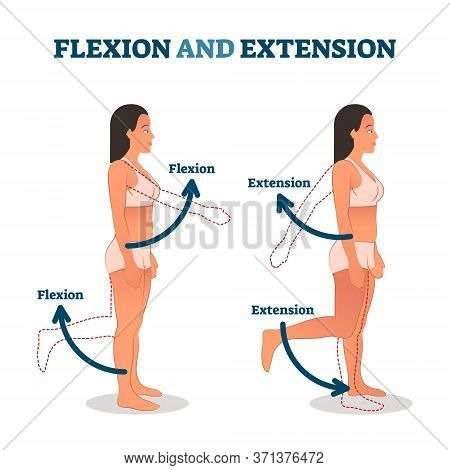Flexion And Extension Vector Illustration. Anatomical Movement Description. Educational Arm Or Leg E