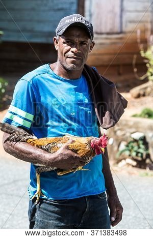 June 2, 2020 Ocoa, Dominican Republic. Dramatic Image Of A Dominican Man Holding His Rooster In A Sm