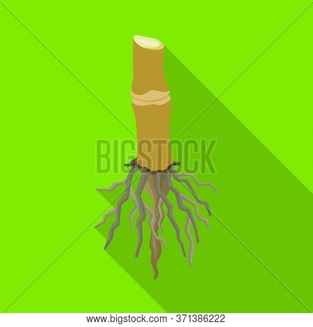 Vector Illustration Of Root And Sugar Symbol. Web Element Of Root And Cane Stock Symbol For Web.