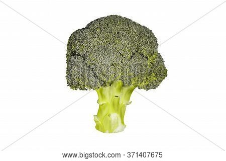 Broccoli Isolated On A White Background. Fresh Broccoli Close-up. Green Asparagus For Cooking Health