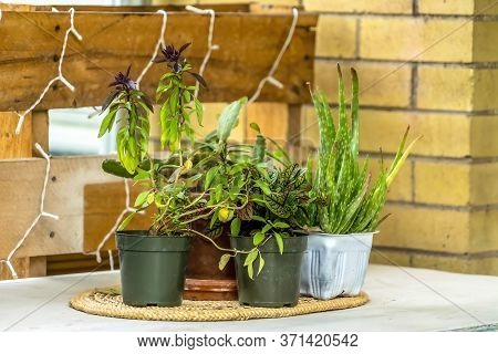 Potted Green Plants On Oval Thick Woven Placemat On A White Table Surface