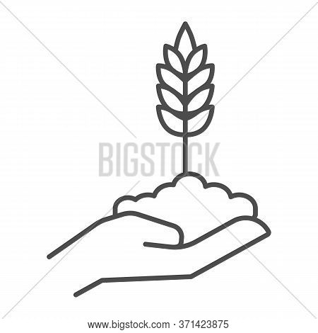 Wheat Spikelet On Human Hand Thin Line Icon, Agriculture Concept, Grows In Caring Hand Sign On White