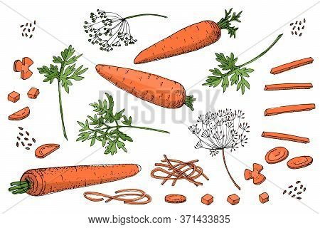Vegetable Vector Sketch. A Set Of Carrots Of Different Types. Isolated Carrots, Diced, Cubes, Rounde