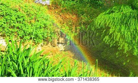 Rainbow In Sprinkler Water