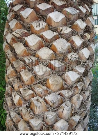 Trimmed Palm Tree Trunk