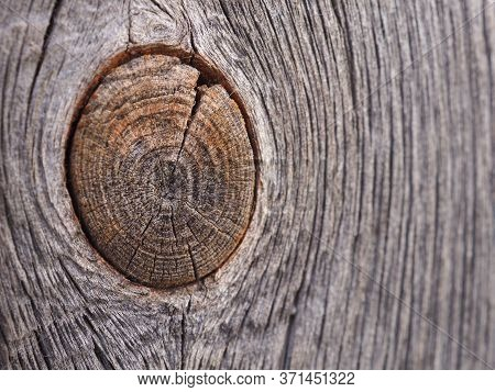 Background From Old Plank With A Bough. Close-up